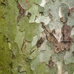 cortezas de árbol